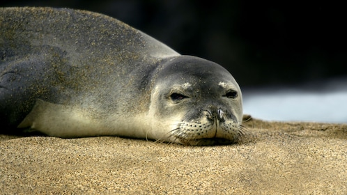 A seal resting on a rock in San Diego