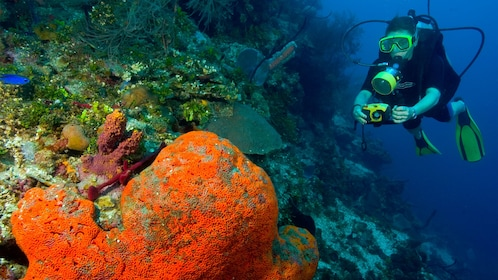 Scuba diver photographing coral with underwater camera in Santo Domingo