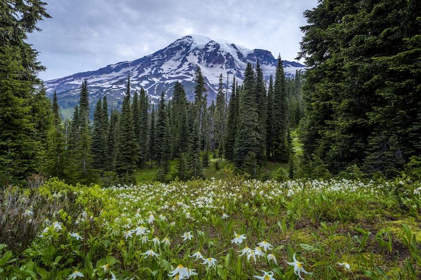 Mt. Rainier Full-Day Tour