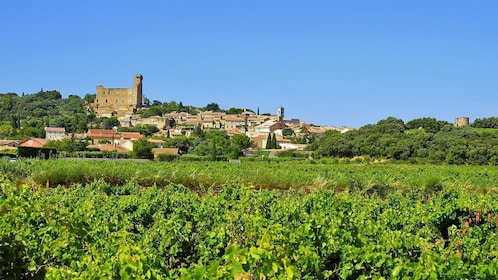 Vineyard of Chateauneuf du Pape in France