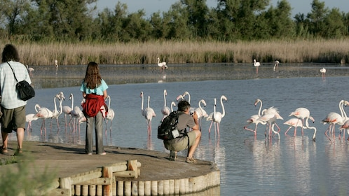 man photographing flamingos in France