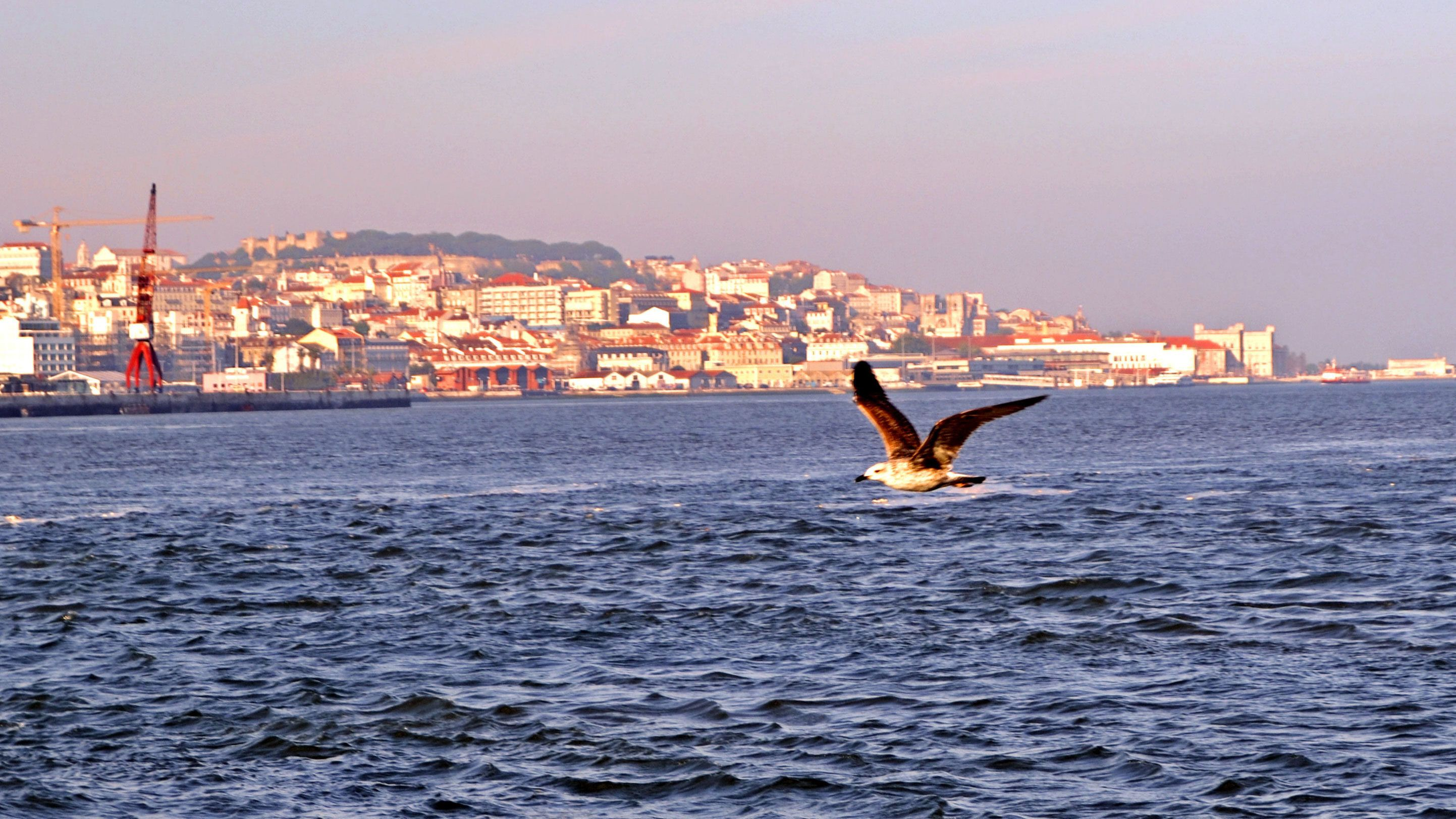 Seagull flying over the water with the city of Lisbon in the background