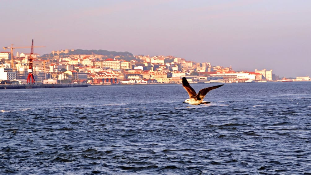 Show item 2 of 6. Seagull flying over the water with the city of Lisbon in the background