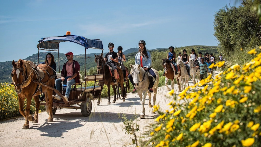 horse drawn carriage leading horse riding group in Crete