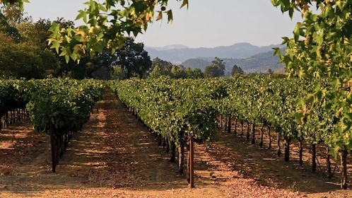 Vineyard view on Temecula Wine Tour near San Diego California