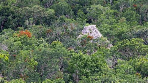 Coba pyramid peeking above the trees in Mexico