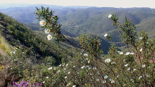 Flowers along trail during hike on Serra do Caldeirão Mountain in Algarve