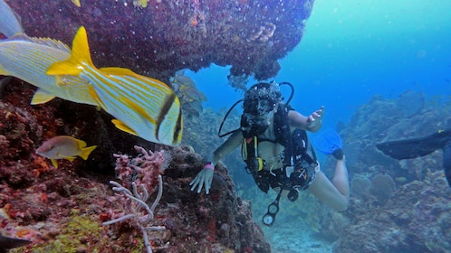 Diving along coral reefs in Mexico