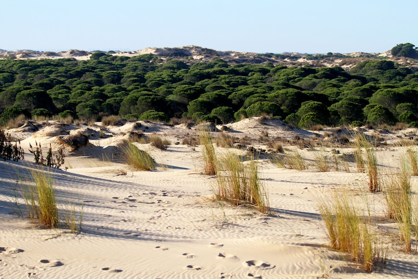 Show item 4 of 4. Day Trip to Doñana from Seville (private)