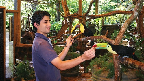 Bird trainer interacting with exotic birds in the Waterfall Gardens