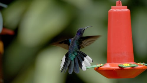 Hummingbird perching on a feeder