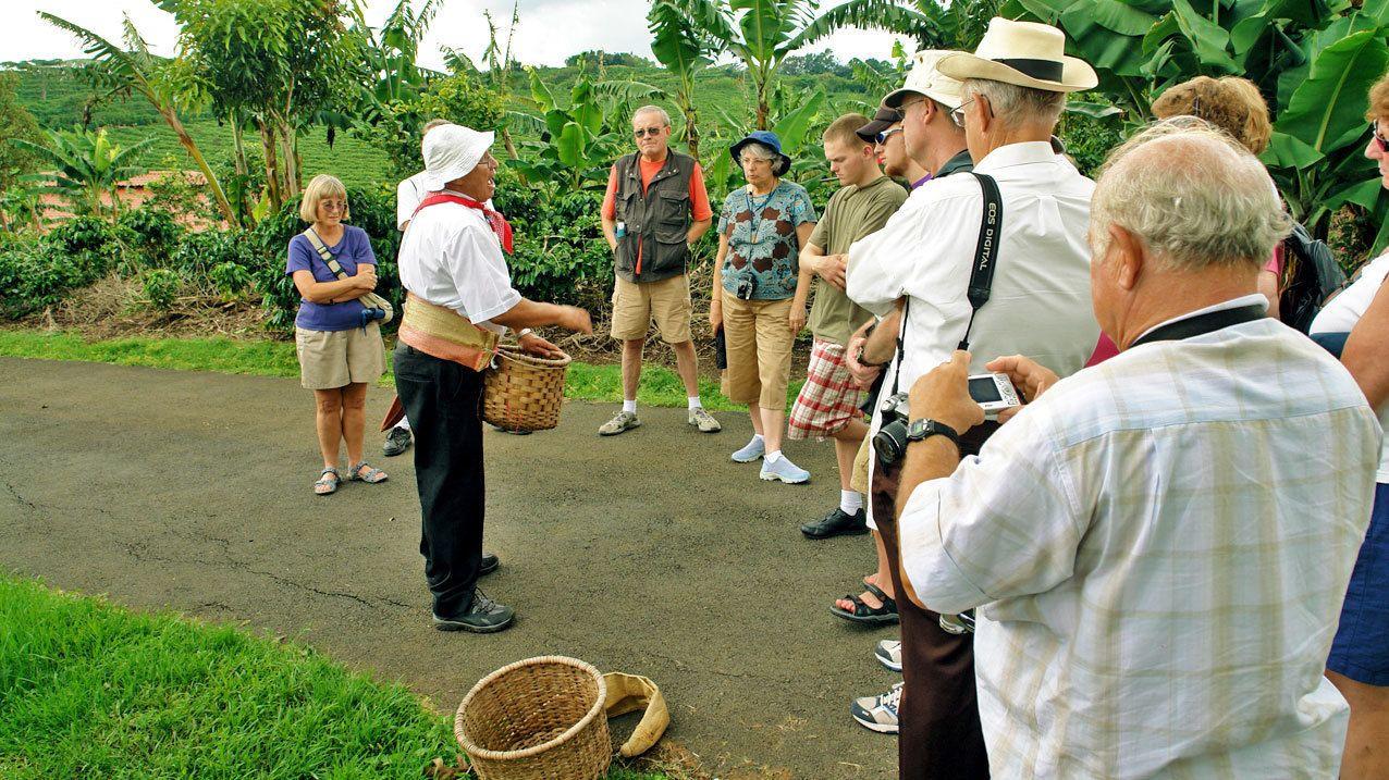 Coffee bean harvester in Jaco