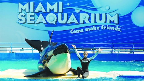 Orca with a trainer at the Seaquarium in Miami