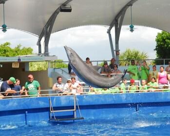 Miami Seaquarium with Transportation