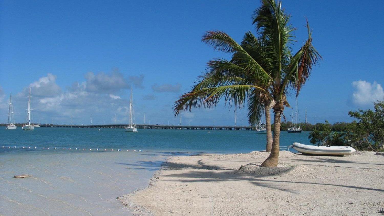 Palm tree on a beach in Key West