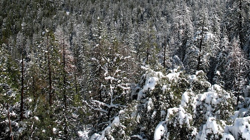 Snow-covered forest at Yosemite National Park in California