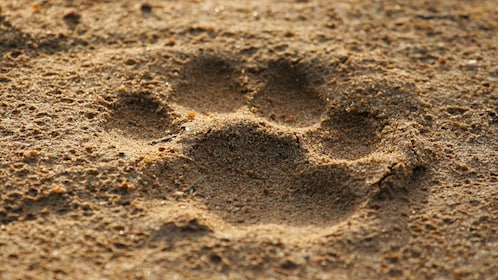 Survival animal tracking in San Francisco