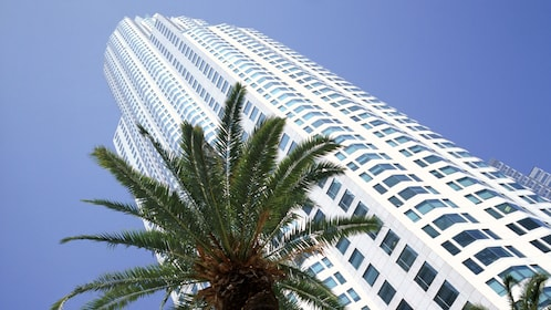 skyscrapers and palm trees near Los Angelse
