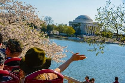 Big Bus Tours, Cherry Blossoms, Spring 2015 -80 (2).jpg
