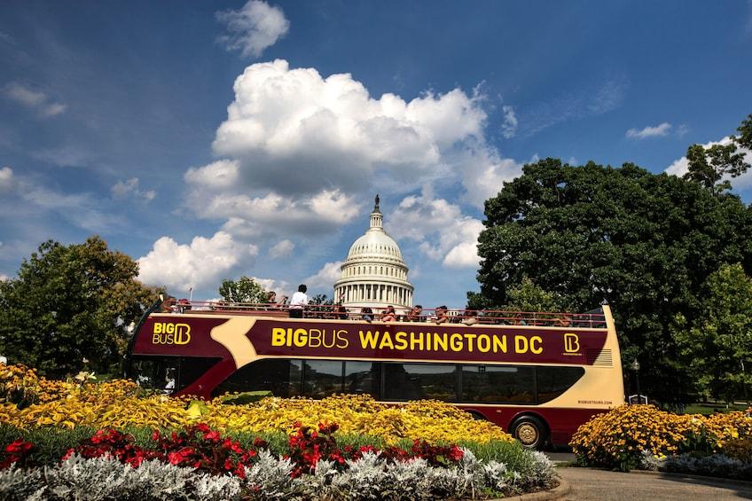 Ver elemento 4 de 13. Washington DC Hop-On Hop-Off Tour