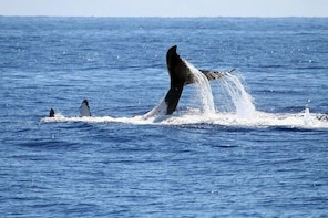 Full Day Whale Watching in Hermanus