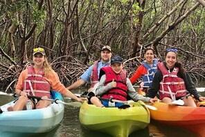 Kayak Tour Barefoot Beach Preserve Magical Mangrove Estuary Adventure