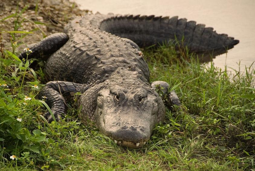 Foto 2 von 8 laden Everglades Airboat Adventure Tour