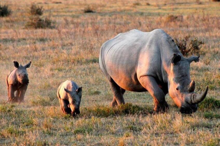 Show item 3 of 7. Khama Rhino Sanctuary