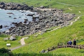 Sanriku Reconstruction National Park Trekking and Fisherman's Lunch Tour