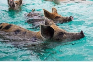 Famous Swimming Pigs Tour from Nassau to Exuma Bahamas Supersport Boat