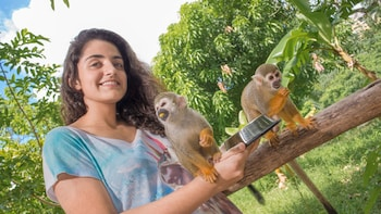 Monkeyland Safari with transportation from Punta Cana