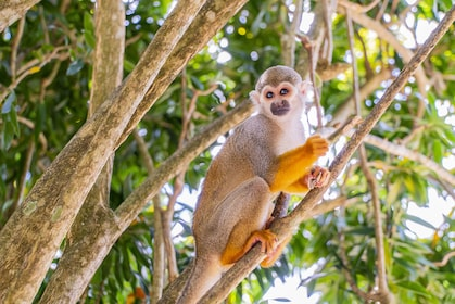 Monkeyland with Typical House Visit
