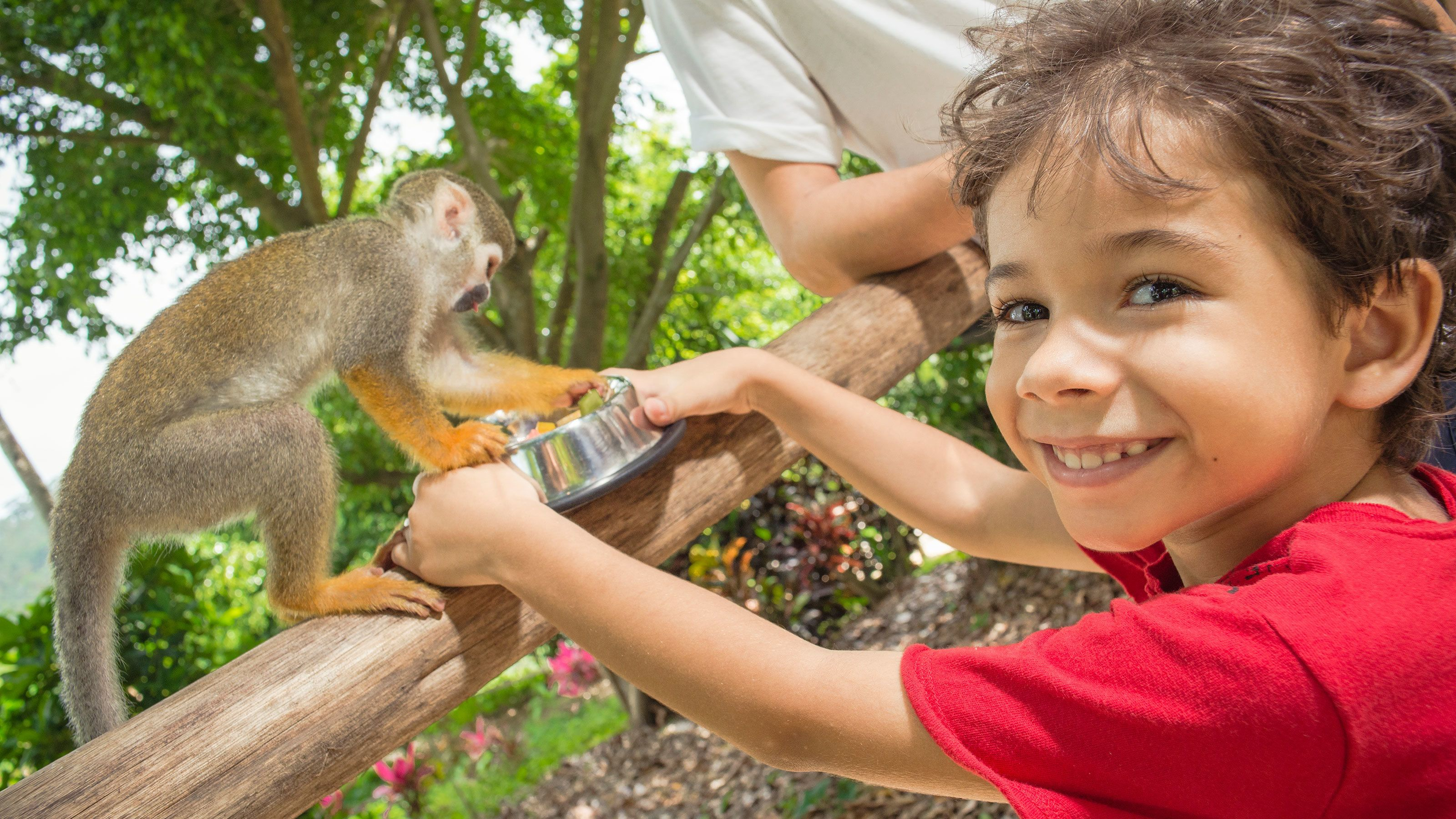 Young boy playing with a monkey at Monkey Land in Punta Cana