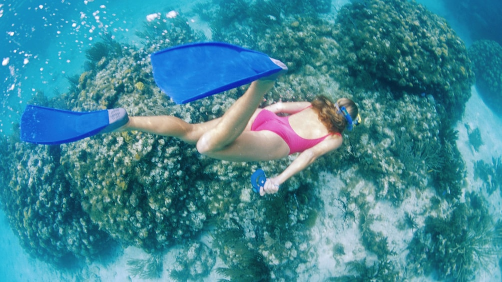 Show item 4 of 8. Snorkeling woman diving down to the coral reef in Cairns