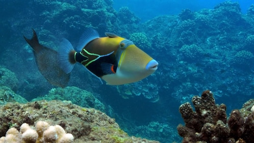 Colorful fish swimming among the coral reef in Cairns