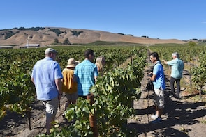 Viticulture with Charm—Sonoma Valley Wine Tour