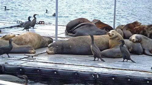 Seals on harbor dock on cruise in San Diego California