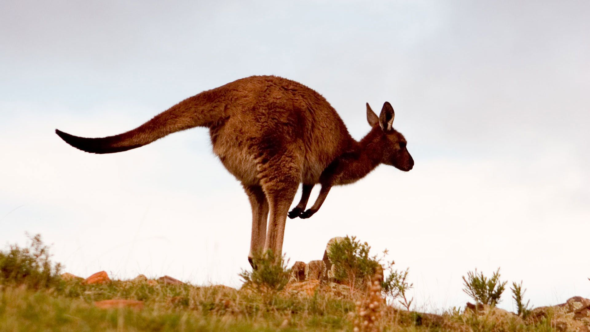 5-Day Adelaide & Kangaroo Island Discovery Tour