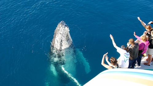 Humpback whale peeking its head out of the water near the boat in Queensland