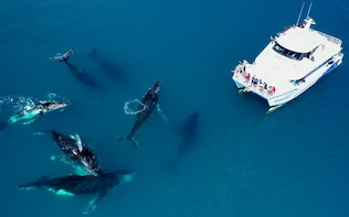 Unforgettable Half-Day Whale-Watching Tour in Hervey Bay