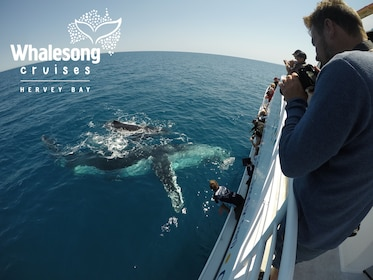 Whalesong Cruises - whale watch Mum and calf mugging.jpg