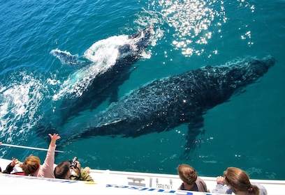 Whalesong Cruises - whale watch mugging2.jpg