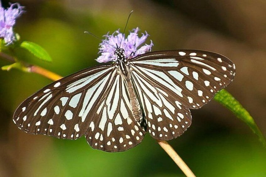 Mhadei Wildlife Sanctuary from Goa
