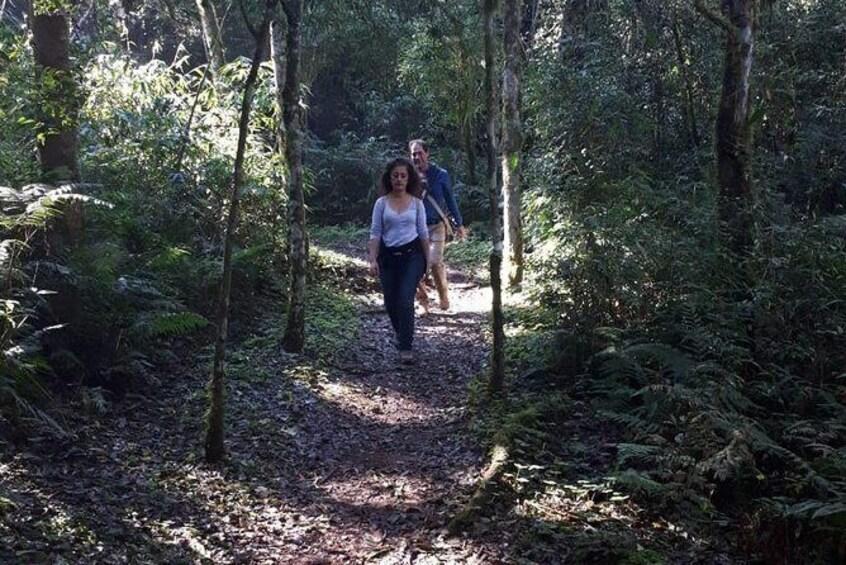 Show item 4 of 6. Day trip to Mocona Falls and Salto Encantado Provincial Park