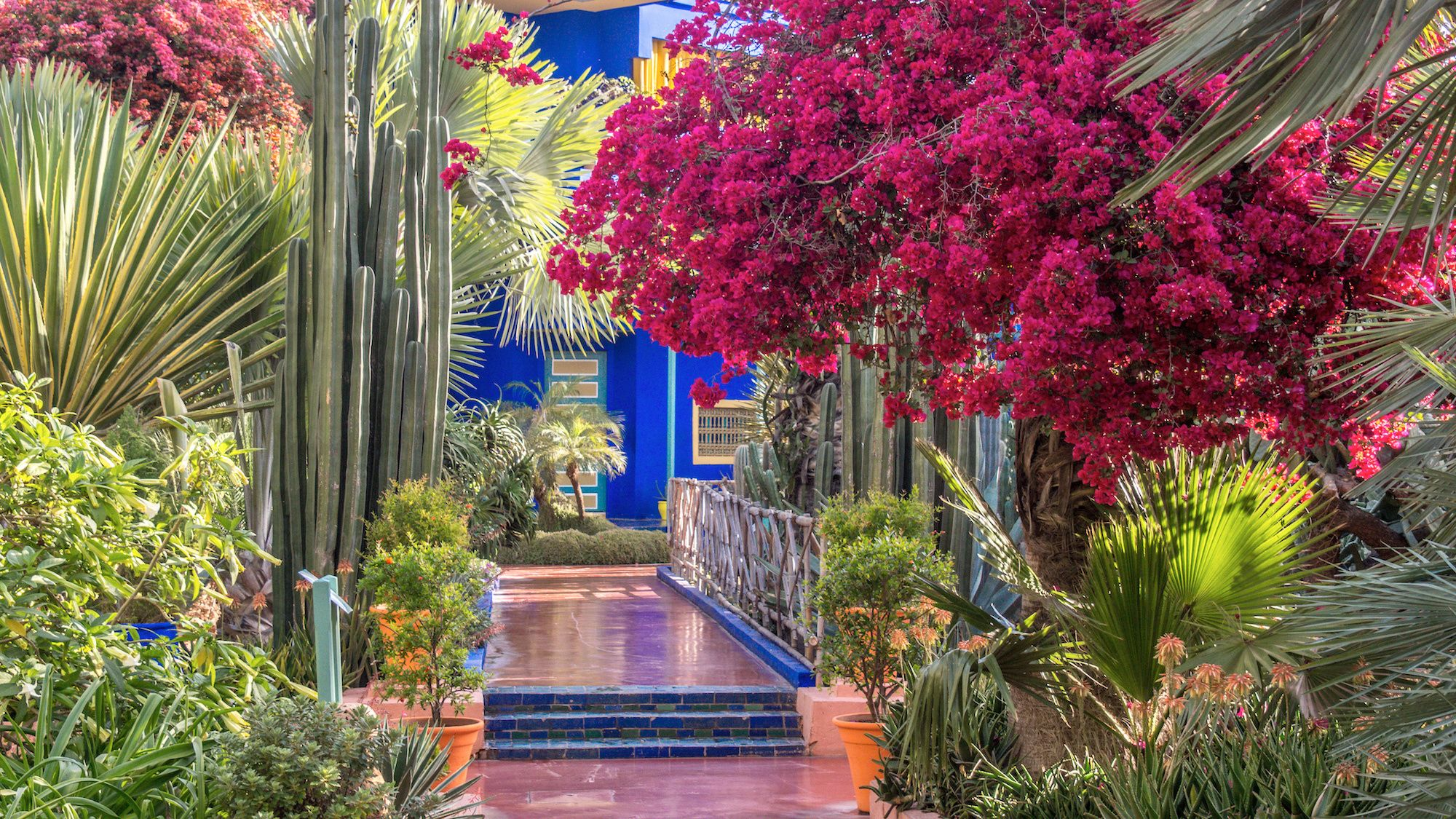 Stunning view inside the renowned Majorelle and Menara gardens in Marrakech