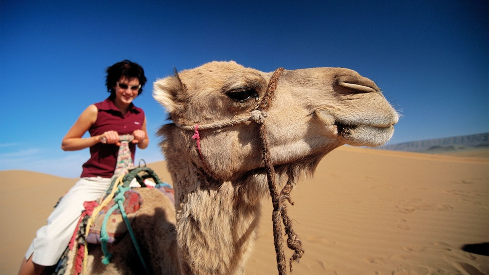 Show item 2 of 5. Woman next to a camel in Marrakech