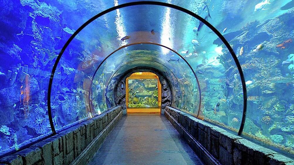 Åpne bilde 2 av 10. Go Las Vegas Explorer Pass: Choose 3, 5 or 7 Attractions