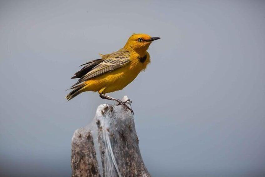 Lake Argyle Birdwatching Charter