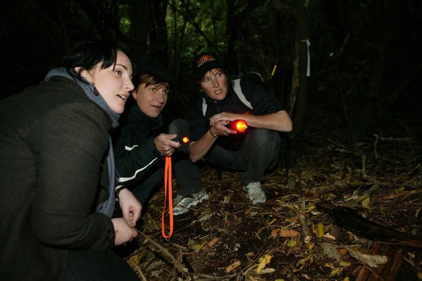 After-Dark Zealandia Wildlife Sanctuary Tour