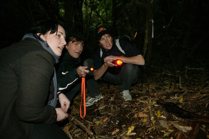 ZEALANDIA by Night Tours - hero image - photo by Zealandia staff.jpg